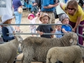 Children getting close to the Sheep