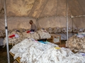 Fleece Wool Exhibits
