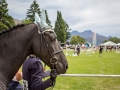 Horse waiting his turn