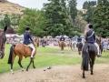 Horses in Grand Parade