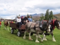 Parade - the Clydsdales