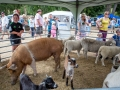 Remarkable Vets Petting Zoo