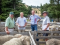 Sheep Judges & Stewards